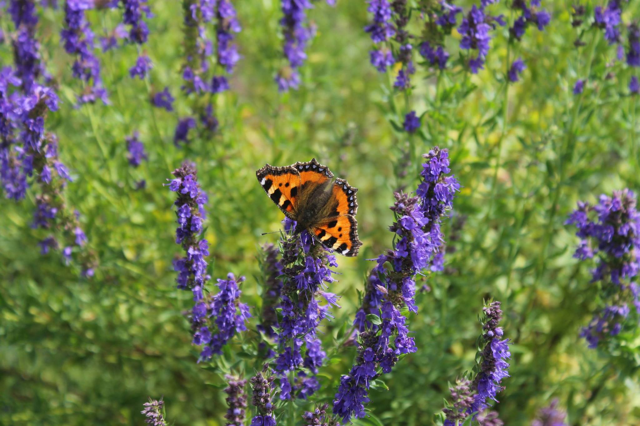 Celebrate Butterfly Month this August