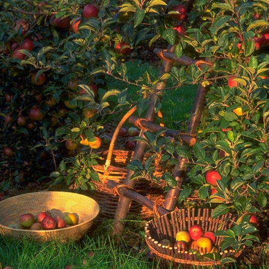 24 fine Landscape Gardening Jobs Uk u2013 izvipi.com